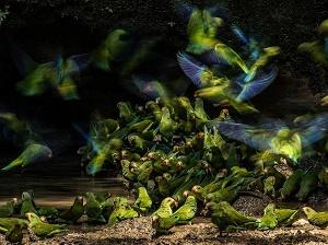 بهترین عکس های گرفته شده از پرندگان - 2018