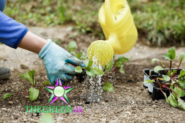 نگهداری از گیاهان در آب و هوای خشک