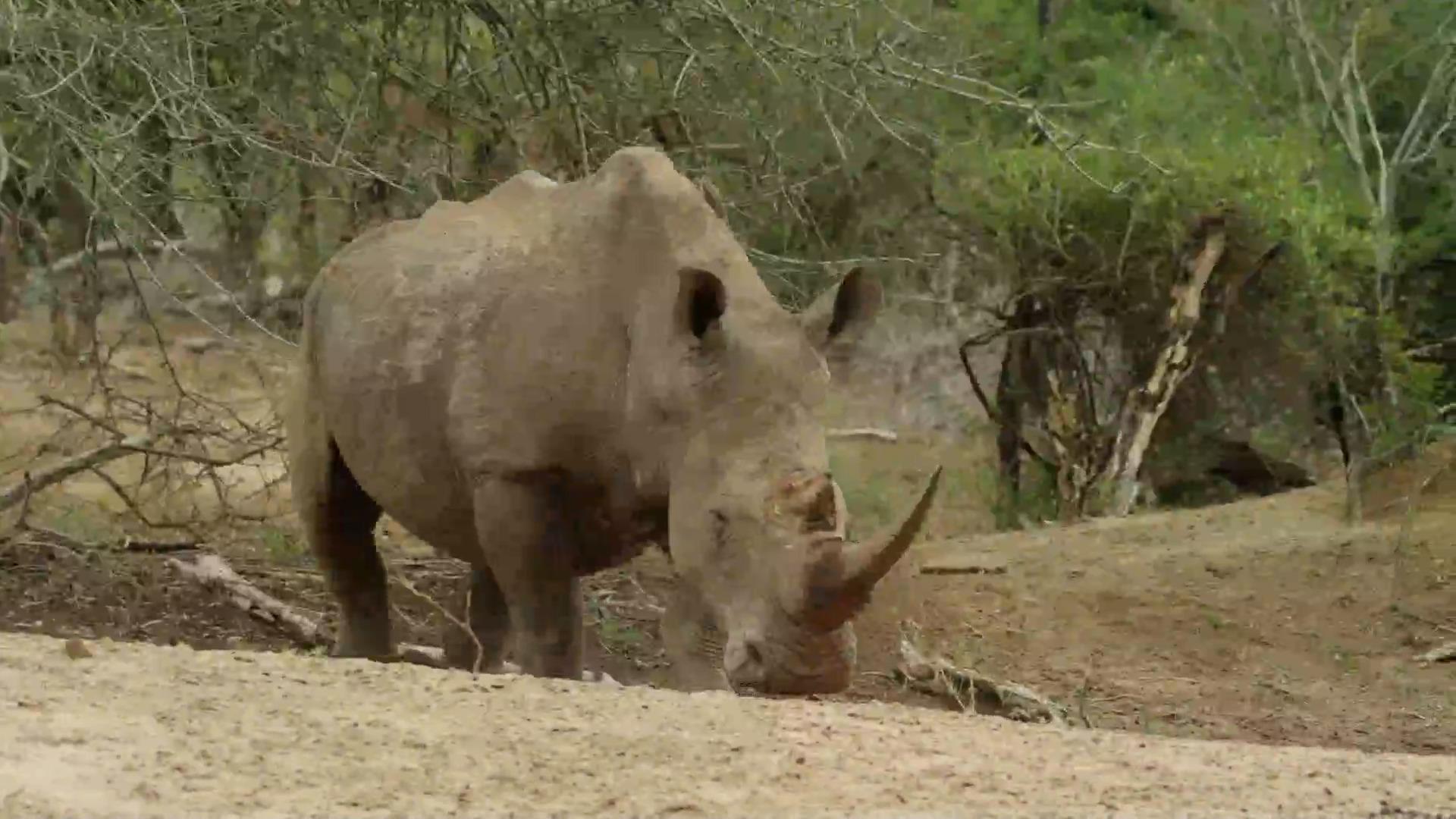 مستند حیات وحش آفریقا