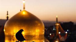 امام رضايي باشيم...
