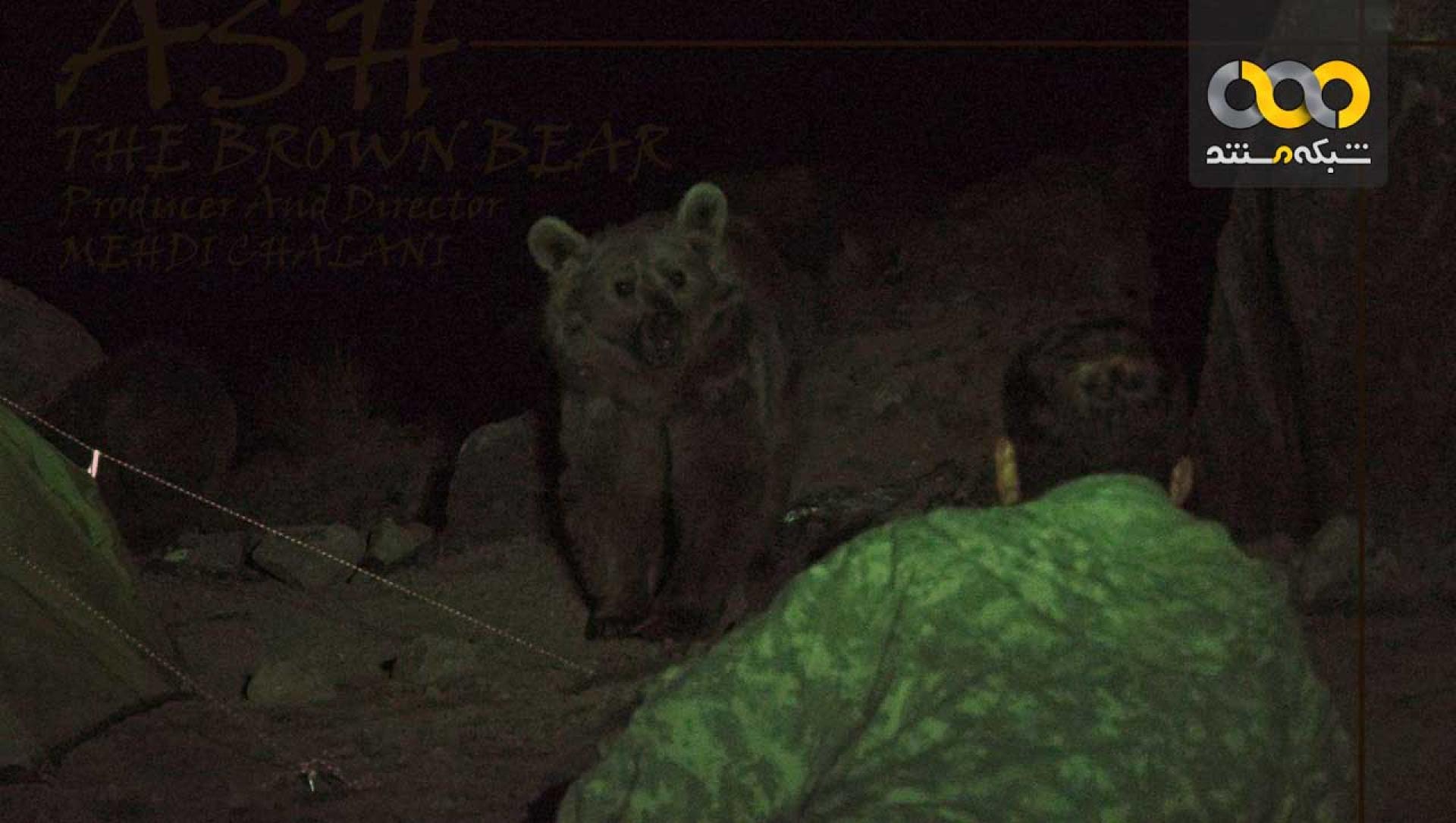 دانلود مستند اش ، خرس قهوه ای با کیفیت HD 1080p