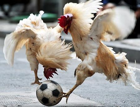 عکسی جالب از جام جهانی پرندگان
