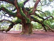 انشا درختی با ویژگی های پا در هوا