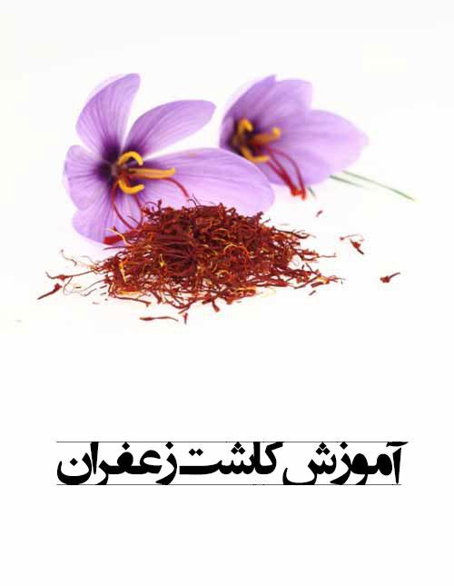 دانلود فیلم و کتاب آموزش کاشت زعفران