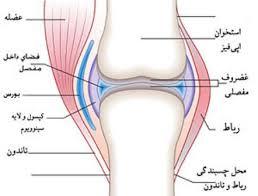 تحقیق رایگان درباره انواع رباط در مفصل ها