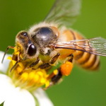 الهام گرفتن ابزار هوش مصنوعی از مغز حشرات