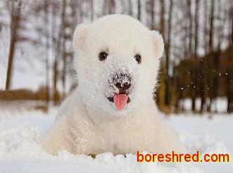 درس سوم داستان انگلیسی ترجمه شده /خرس قطبی/The Polar Bear