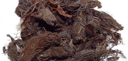 خواص سنبل الطیب برای بدن