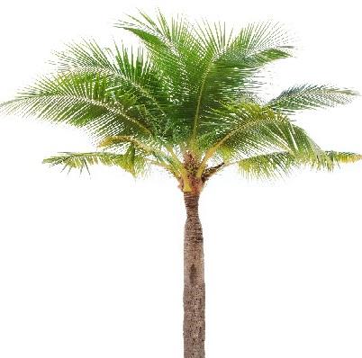 داستان انگلیسی 11/the Date Palm