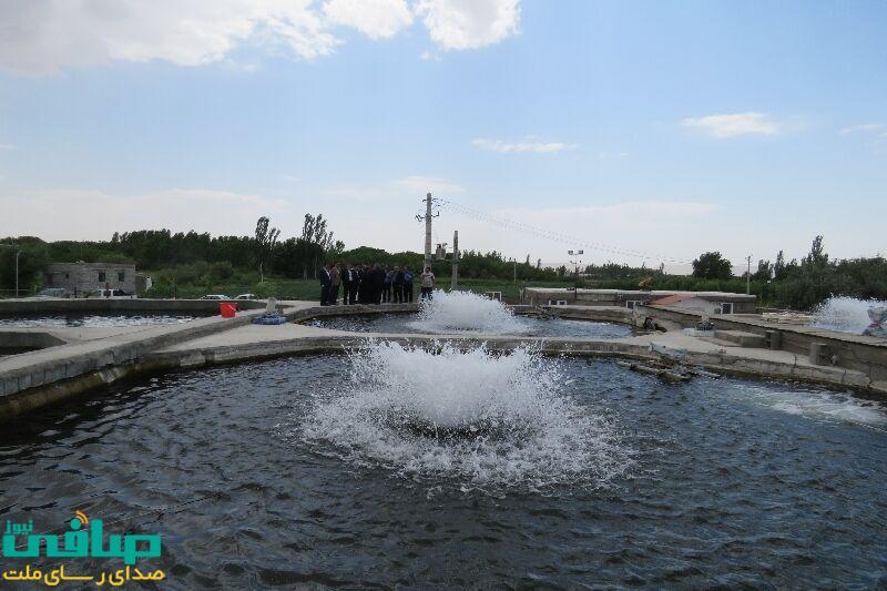 تولید ۲ هزار تن ماهی سردآبی در پایاب سد علویان مراغه