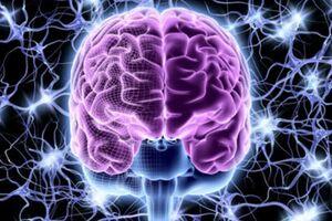 🌺 آشنایی با نیمکره های مغز !