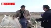 تلخ و شیرین حرفه خبرنگاری! | سوتی های خبرنگاران در گزارش حسینی بای