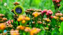کلیپ جدید عید غدیر خم توسط گروه لیله القدر پخش از شبکه 1سیما
