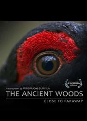 دانلود فیلم The Ancient Woods 2017