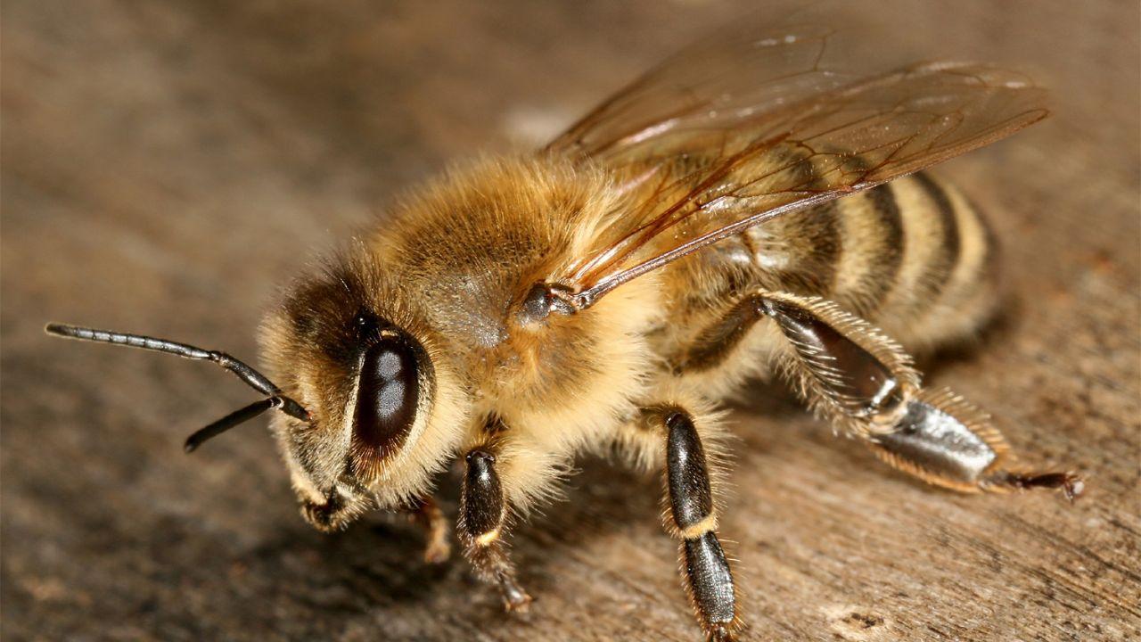 زنبورها به کمک پلیس میآیند