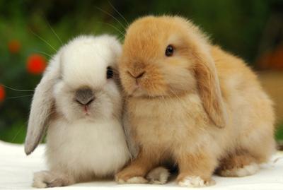 آموزش نگهداری از خرگوش