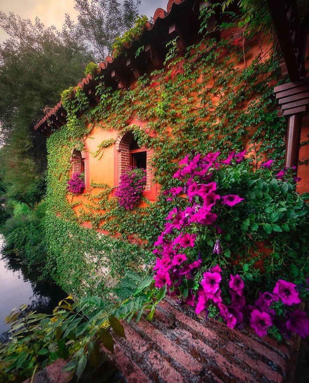 نمای ساختمان با گل و گیاه