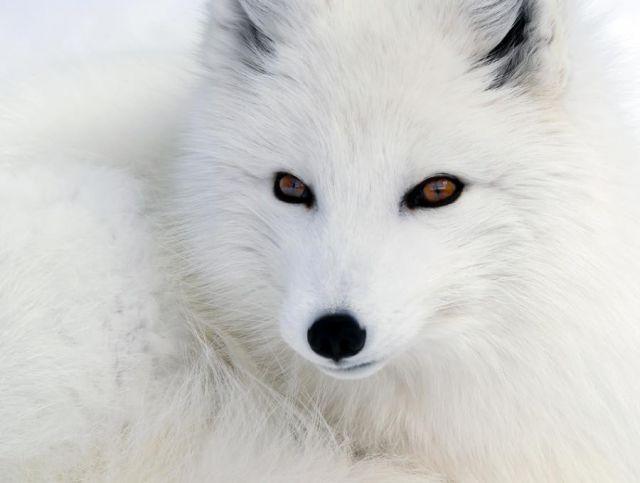 داستان کوتاه در مورد یک روباه