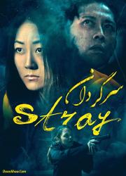 دانلود دوبله فارسی فیلم سرگردان Stray 2019