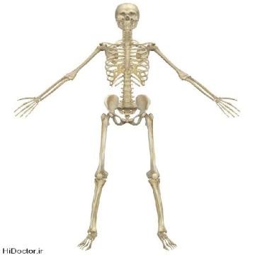 پاورپوینت استخوان های بدن