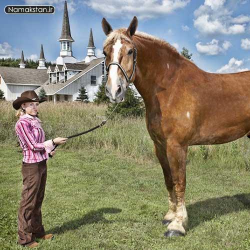 رکورد گنیس بزرگترین اسب که تابه حال زنده است