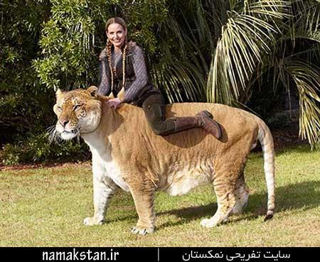 عجیب ترین رکورد گنیس بزرگترین گربه سان در جهان