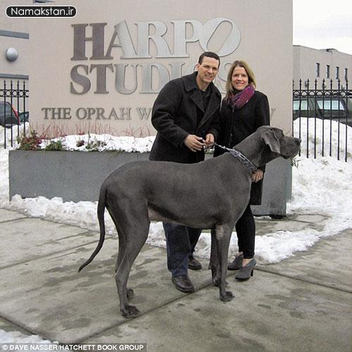 عجیب ترین رکورد گنیس بزرگترین سگ خانگی جهان
