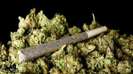 مجازات افرادی که ماریجوانا می کارند چیست؟