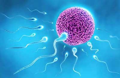 افزایش اسپرم,اسپرم چیست