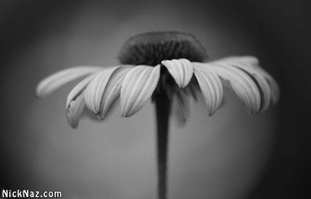 عکس های سیاه و سفید