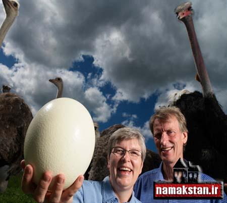 عجیب ترین رکورد گنیس بزرگترین تخم پرنده در جهان