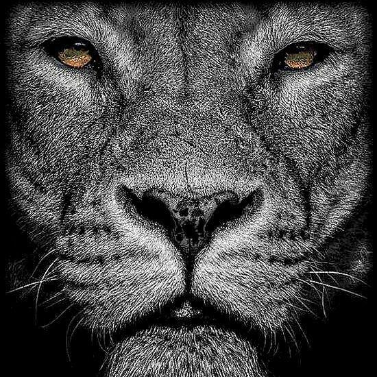 اهنگ Lion از علیرضا سرپاس