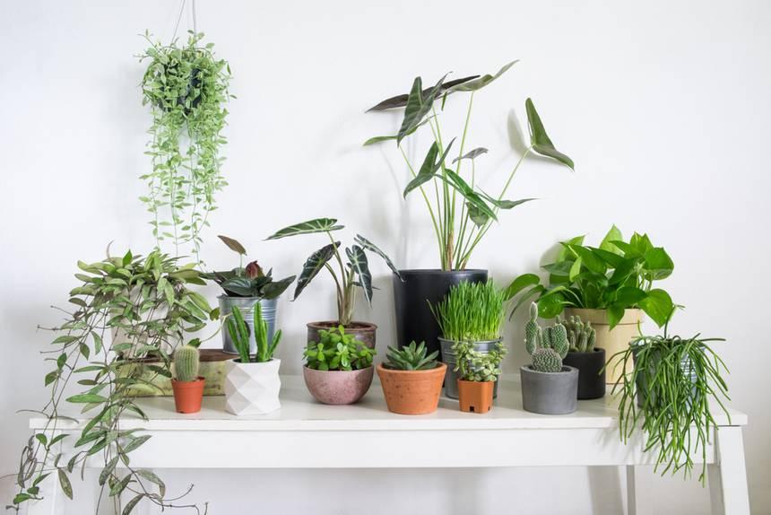 گیاهان آپارتمانی مناسب برای خانههای کمنور