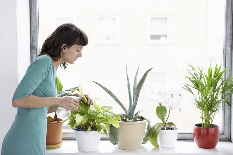تاثیر گیاهان آپارتمانی روی جسم و روح انسان