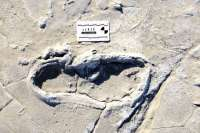قديمي ترين ردپاي انسان در آفريقا