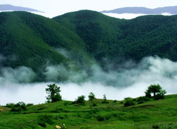 دانستنی های جالب درباره جنگل ابر شاهرود