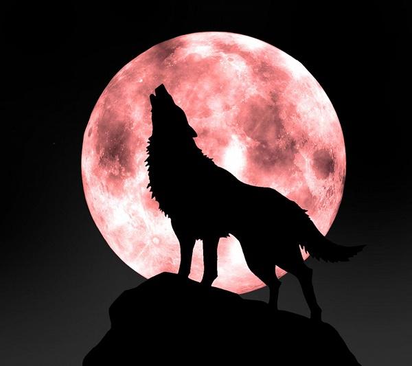 گرگی...