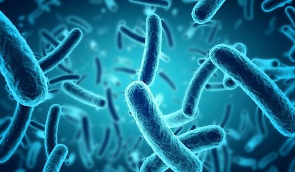 اخبار,اخبار پزشکی,میکروب مفید