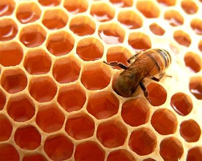 حکایت عسل وحشی و فالوده