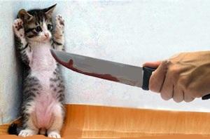 داستان جالب« گربه را دم حجله کشتن»