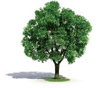 ديدن درخت در خواب چه تعبيري دارد؟