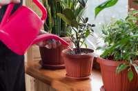 روش آب دادن به گياهان در خانه
