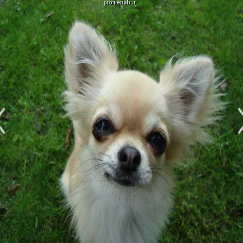 عکس سگهای زیبای خانگی
