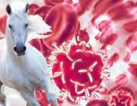 درمان کرونا با پلاسماي خون اسب