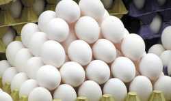 وضعيت تخم مرغ در بازار همدان