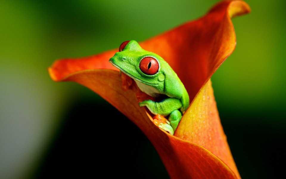 البوم عکس های قورباغه زیبا فانتزی سبز