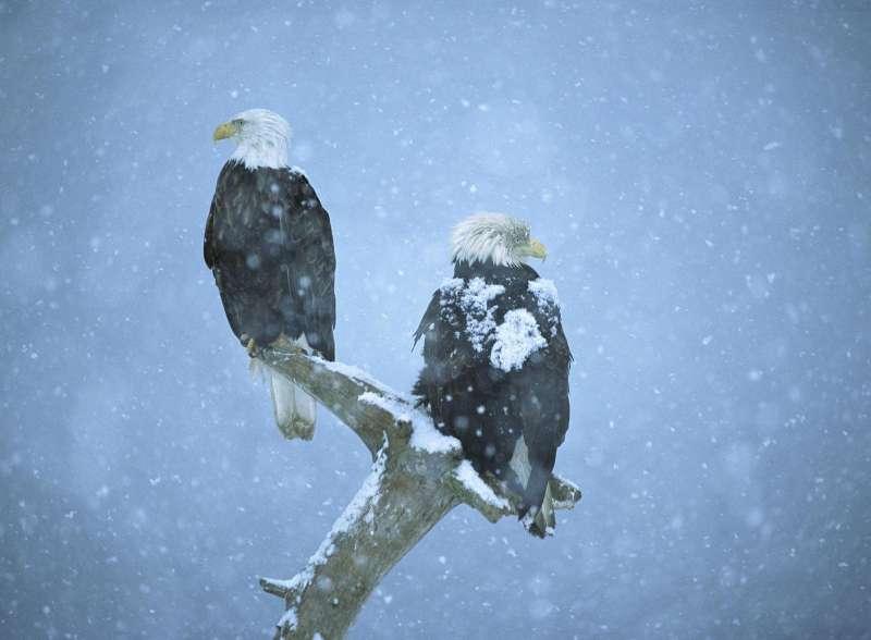 عکس عقاب واقعی برای پروفایل