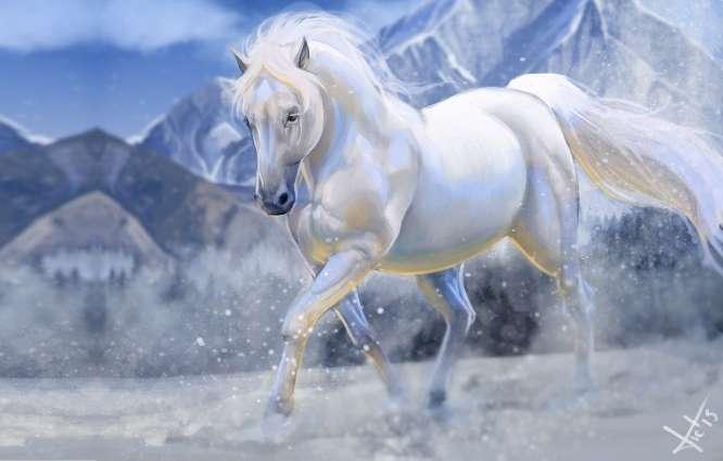 پروفایل زیباترین عکس های اسب ایران و جهان