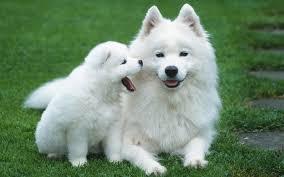 کلیپ خنده دار گرفتن سگ با دست پسر
