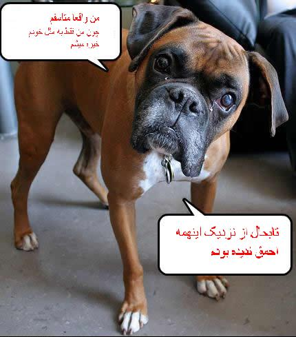 عکس های خنده دار از سگ